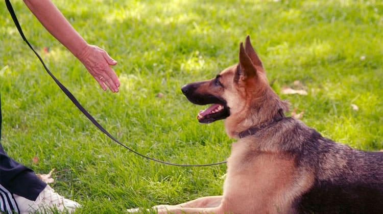 Köpekler İnsan Dilini Nasıl Anlıyorlar?